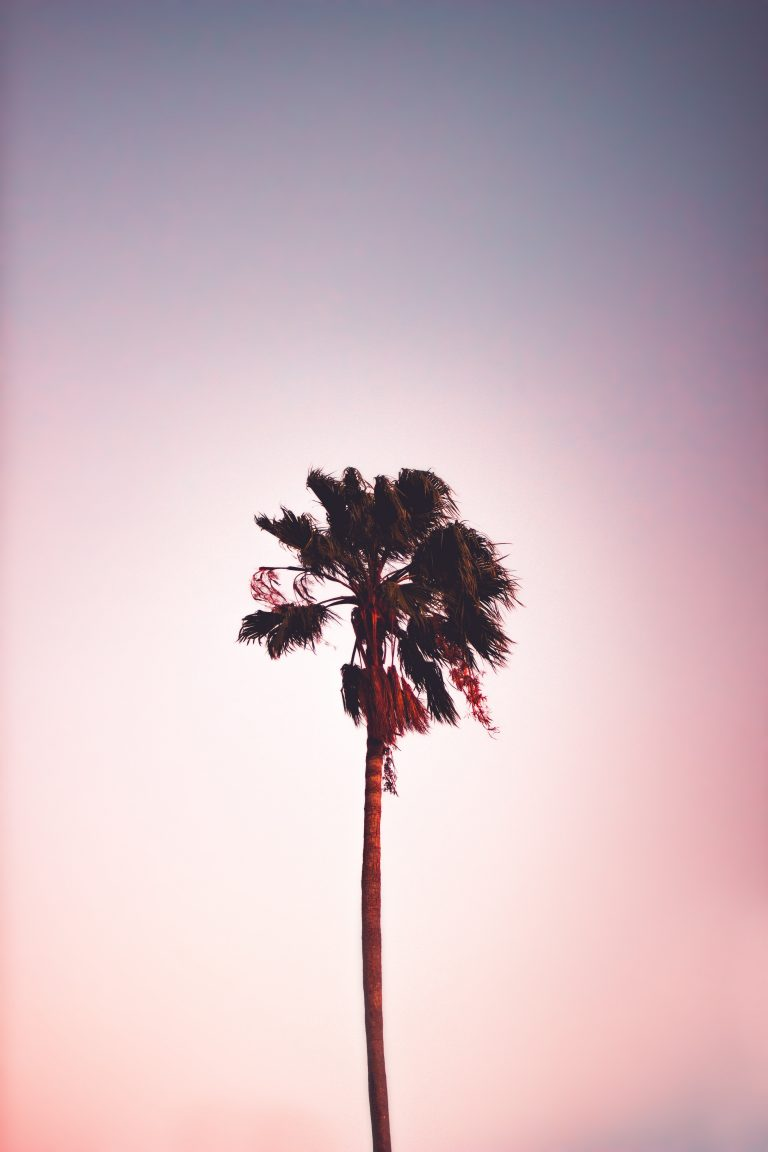 palm wallpaper 114